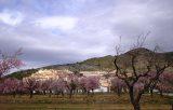 Jalon-La-Almazara