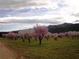 Jalon-blossoms