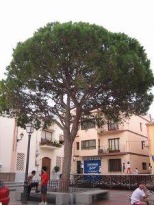 plaza-mayor-de-alfaz-del-pi