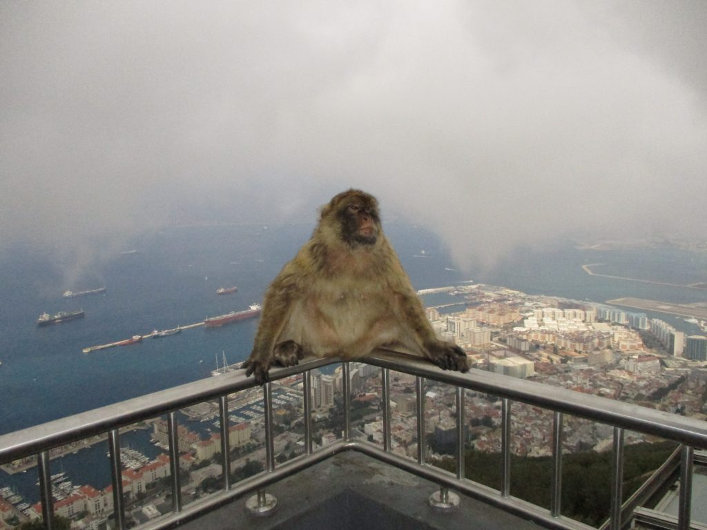Gibraltar - monkeys