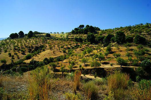Andalucia_landscape